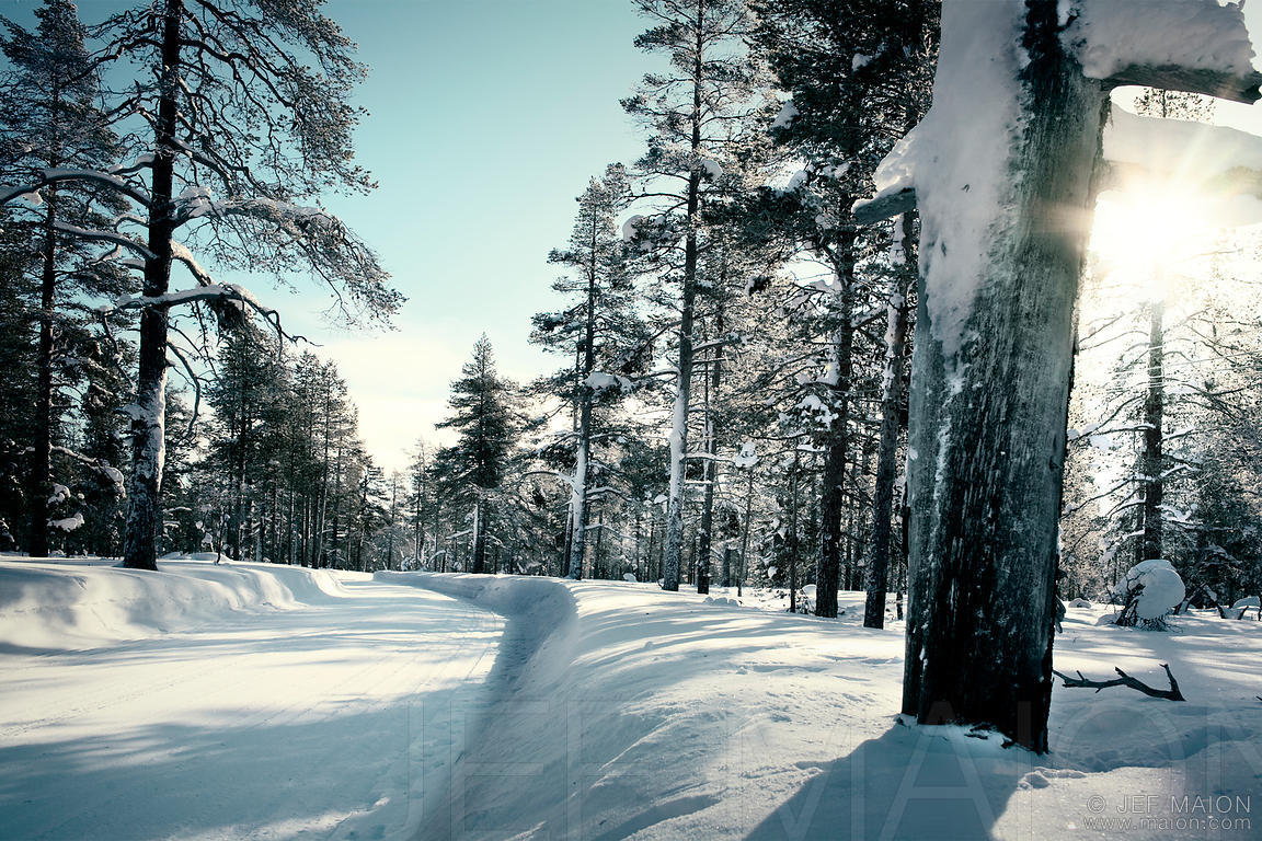 Snow road in forest