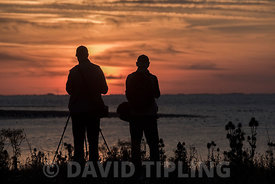 Two bird watchers silhouetted at sunset watching waders including Knot and Oystercatchers as the tide comes in across the Wash at Snettisham in Norfolk September