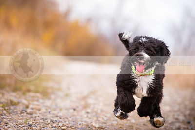 airborn puppy running with joy to camera with minimal background