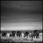 8600-Elephants_herd_crossing_the_plain_Laurent_Baheux