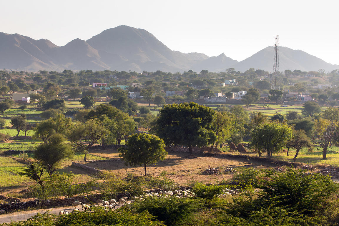 Splendid farmland near Kharekhari village, Rajasthan, India