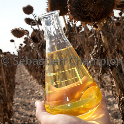 OIL OF SUNFLOWER WITH GRAINS