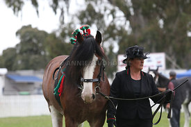 HOY_220314_Clydesdales_2391