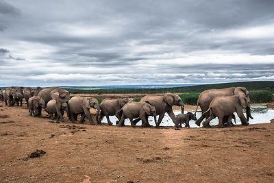 Safari Big five, Addo Elephant Park