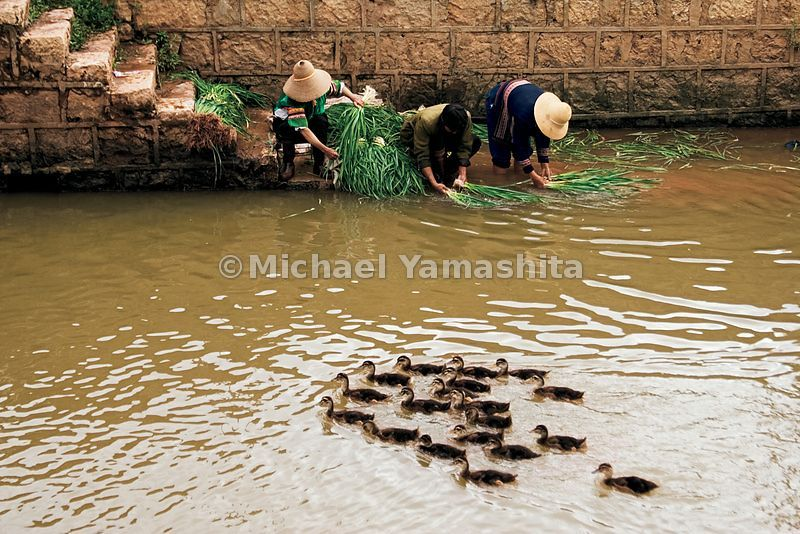 Zheng He, growing up among people like these villagers washing vegetables in an irrigation canal, did not seem destined for fame.