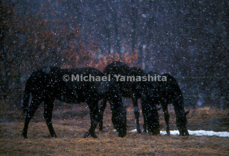 Hokkaido is Japan's center for raising cattle and horses including thoroughbred race horses.