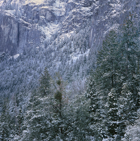 012-California_CA141019_Yosemite__Fresh_Snow_Vignette_05_Preview