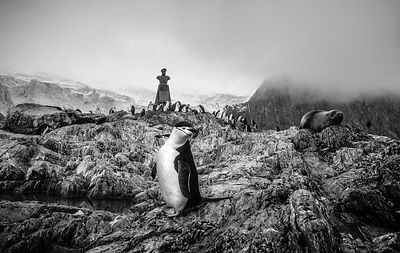 Antarctica B&W photos