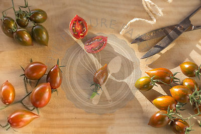 bunches of pointed tomatoes with vintage metal scissors on wood in late afternoon sun