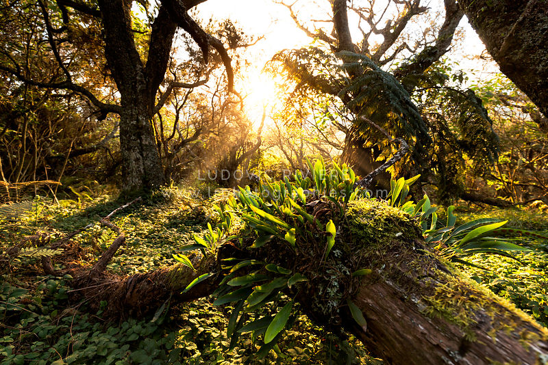 Hidden beauty in the heartof Reunion Island Forests