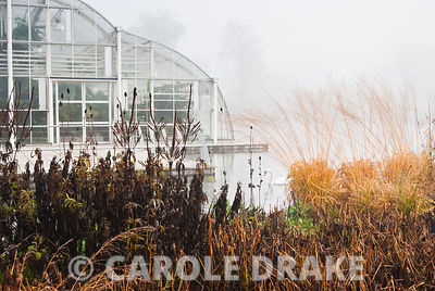 Tha glasshouse on a misty day with grasses and flowering perennials in the foreground. RHS Garden Wisley, Woking, Surrey, UK