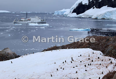 Gentoo Penguin colony at Neko Harbour, Andvord Bay, Antarctic Peninsula with polar cruise vessel Akademik Ioffe behind