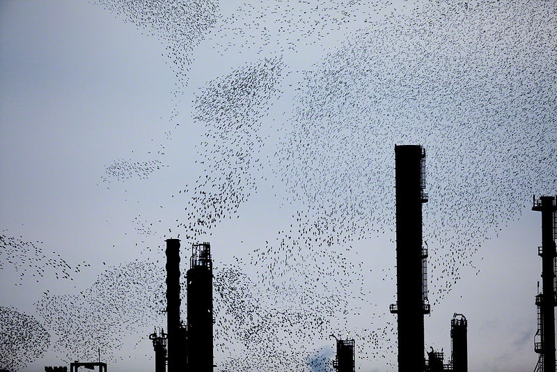 Refinery-Flocks-Blue-03-Edit