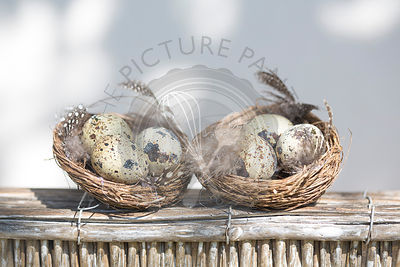 Quails eggs in a pair of minature nests, on rustic wooden box, against white background.