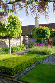 Upper courtyard featuring squares containing box, alliums and a single tree (Acer platanoides)