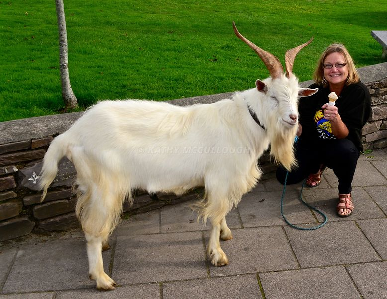 Billy Goat and Me