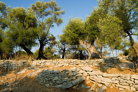 Olive trees, Meganisi Island, Lefkas, Ionian Islands, Greece.