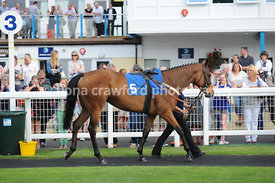 Wed 21st Aug 2013 5.40pm Juvenile Maiden Hurdle with winner Baltic Blade