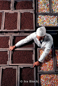 A worker moving chocolates in a candy factory