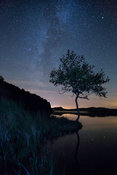 Northumberland Tree at night