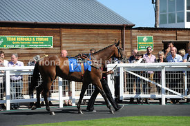 2.10pm 31st August 2013 Juvenile Hurdle with winner Walter White
