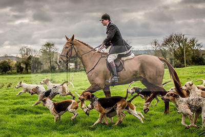 Portman Hunt at Shapwick Nov 2015 photos