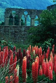 Ruins of Tintern Abby, Wales
