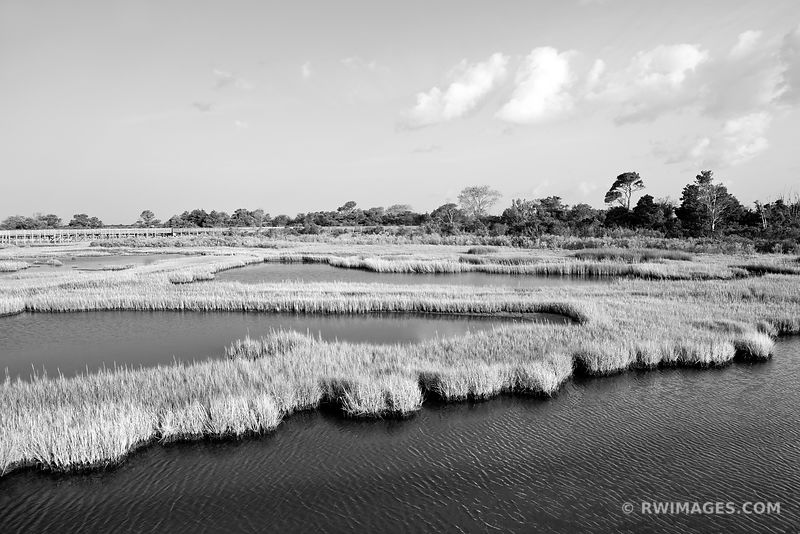 CHINCOTEAGUE BAY MARSH WETLANDS ASSATEAGUE NATIONAL SEASHORE MARYLAND BLACK AND WHITE