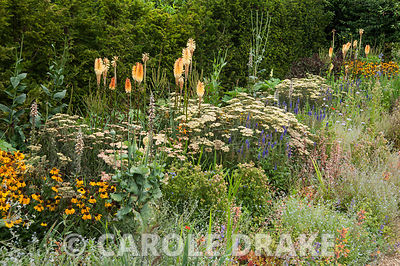 Border including Achillea 'Terracotta', Kniphofia 'Tawny King', helenium, digitalis and heuchera. RHS Garden Harlow Carr, Harrogate, North Yorkshire, UK