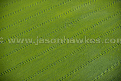 Aerial view of fields in Buckinghamshire
