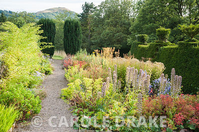 Path beside border of late summer perennials including asters with euphorbias and phlomis, leads toward a pair of fastigiate yews framing a view to the British Camp, or Herefordshire Beacon. Perrycroft, Upper Colwall, Herefordshire, UK