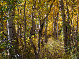 Zion_National_Park_2012_272
