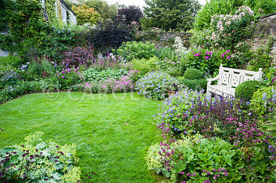 The Walled Garden planted with purples, pinks and blues including Geranium Rozanne = 'Gerwat', Salvia nemerosa 'Caradonna', Astrantia 'Hadspen Blood', dahlias and clipped box beside a wooden bench. Bosvigo, Truro, Cornwall, UK