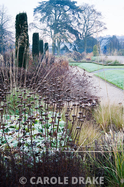 A light frost on a November morning dusts the skeleton forms of herbaceous perennials and grasses including Stipa gigantea, Phlomis russeliana, sedums and asters in box edged beds in the Italian Garden designed by Tom Stuart Smith. Trentham Gardens, Trentham, Stoke-on-Trent, Staffordshire