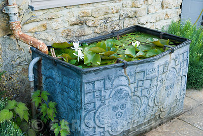 Ornamental lead water trough containing white flowered water lily. Melplash Court, Bridport, Dorset, UK