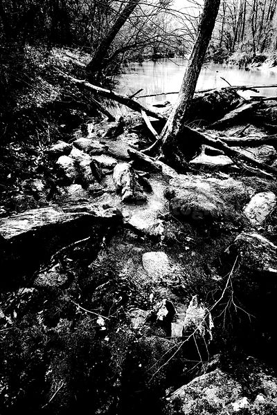 Eno River Roots and Rocks