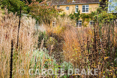 Mix of grasses, silvery Ballota pseudodictamnus and perennials seedheads including phlomis and Digitalis ferruginea, with apricot coloured house behind. The Buildings at Broughton, near Stockbridge, Hants