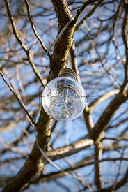 LED bulb in a tree.