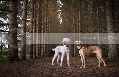 two dogs looking away standing in row of pine trees