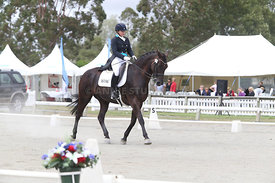 SI_Festival_of_Dressage_310115_Level_6_7_MFS_0637