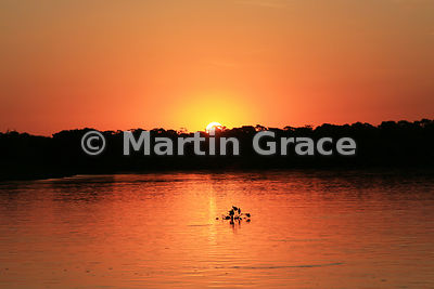Spectacular colours as the sun sets over River Cuiabá, North Pantanal, Mato Grosso, Brazil, with a small silhouetted floating raft (camalote) of Common Water Hyacinth (Eichhcolornia crassipes)