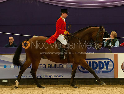 Show Hunter of the Year photos