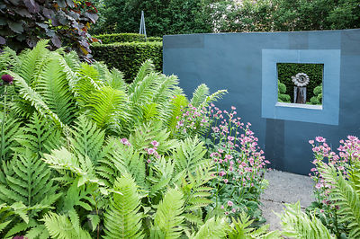 Ammonite sculpture by Darren Yeadon framed by a window in a grey wall on one side of the flower garden, with lush ferns and pink astrantias in the foreground. Tony Ridler's garden, Swansea, Wales, UK