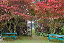 Maples and benches flanking walled garden gate