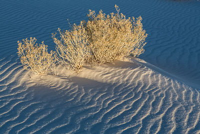 Morning Light on the Dunes #2