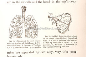 XXantique medical illustration - (5 of 60)