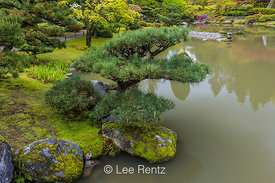 Pond and Pine in Seattle's Japanese Garden