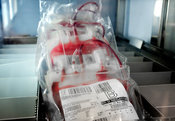 Blood cell packs in pathology laboratory