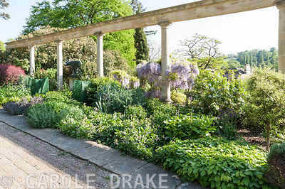 Colonnade along the Great Terrace frames a mixed border including berberis and wisteria. Iford Manor, Bradford-on-Avon, Wiltshire