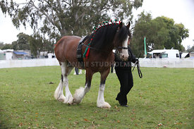 HOY_220314_Clydesdales_2394